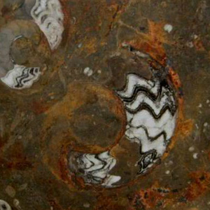 Fossile Etrusco (Brown Marble) stone